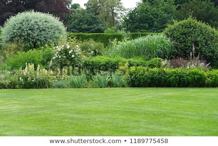Formal jardins belo geométrico projeto jardim Foto stock © chris2766