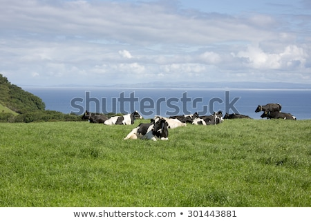 Sunny landscape with fields and blue sky in Scotland Stock photo © Julietphotography