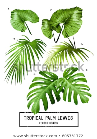 Tropical undergrowth Stock photo © smithore