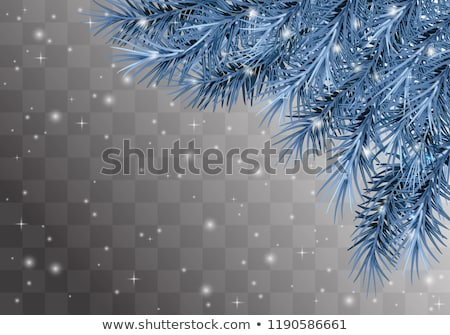 spruce branches with cones and hoarfrost stock photo © kotenko