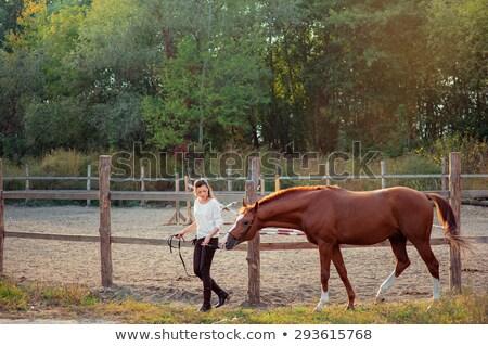 morena · posando · caballo · dama · sexy · modelo - foto stock © konradbak