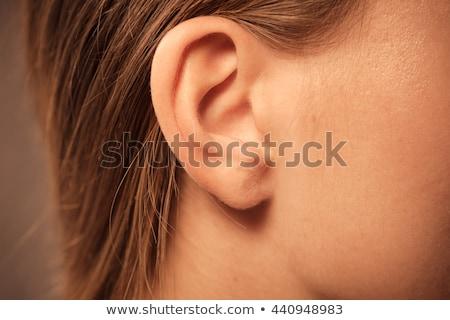 人間 · 耳 · 解剖 · 図 · サウンド · 図面 - ストックフォト © bluering