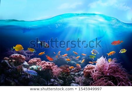 caribbean · deniz · sualtı · mavi · gökyüzü · arka · plan - stok fotoğraf © lunamarina