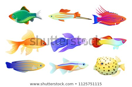 Betta and Neon Tetra Fishes Set Isolated on White Stock photo © robuart