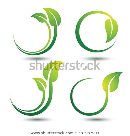 logo green leaf circle eco vector symbol Stock photo © blaskorizov