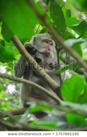 six monkey in nature stock photo © colematt