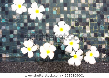 Beautiful tropical frangipani flowers swiming in the pool  Stock photo © dashapetrenko
