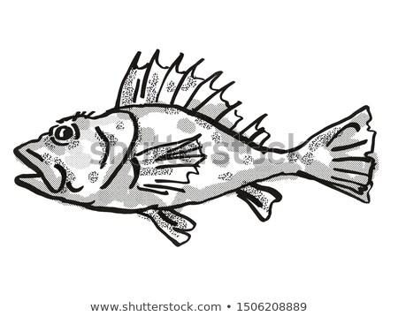 Western Scorpionfish Australian Fish Cartoon Retro Drawing Stock photo © patrimonio