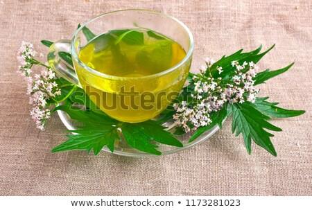 çay bitkisel çaylar cam çalar saat beyaz Stok fotoğraf © Saphira