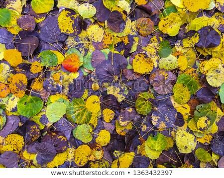 текстуры лист тополь тесные дерево аннотация Сток-фото © Alkestida