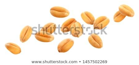 Vallen tarwe zaden rijp landbouwer hand Stockfoto © nomadsoul1