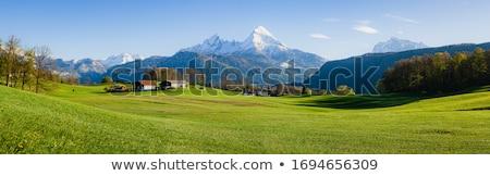 rolling dandelion meadow stock photo © jsnover