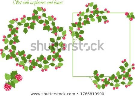 Erdbeere Rahmen Illustration rot Spitze schachbrettartig Stock foto © ElaK