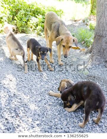 female dog with puppies tobago stock photo © phbcz