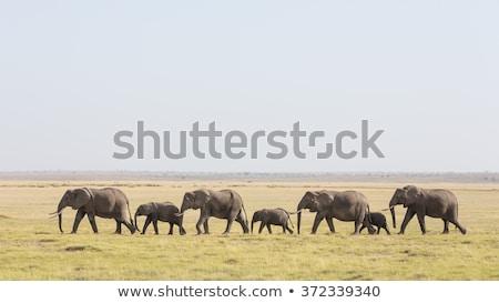 ходьбе слон фотография природы подвесной вниз Сток-фото © mybaitshop