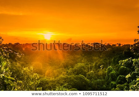 ストックフォト: ジャングル · 日没 · 木 · 葉 · 赤