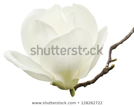 One white flower with message-card Stock photo © boroda