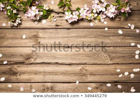 Stock fotó: Alma · virág · fa · fából · készült · virág · fa