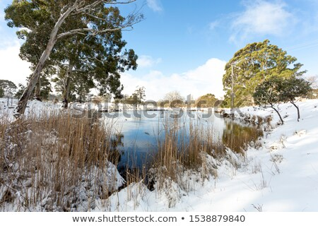Stock photo: Rural Australia countryside water hole and gum trees
