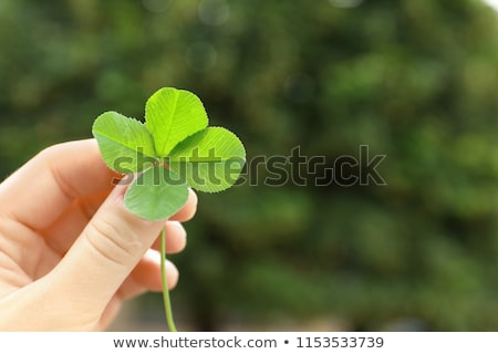happy four leaf clover shamrock holding a sign stock photo © chromaco