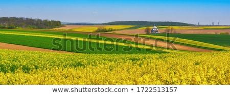 Agriculture Pologne ciel fleur arbre Photo stock © linfernum