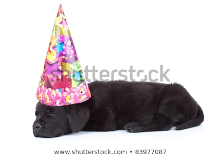 side view of a cute black labrador retriever sleeping Stock photo © feedough