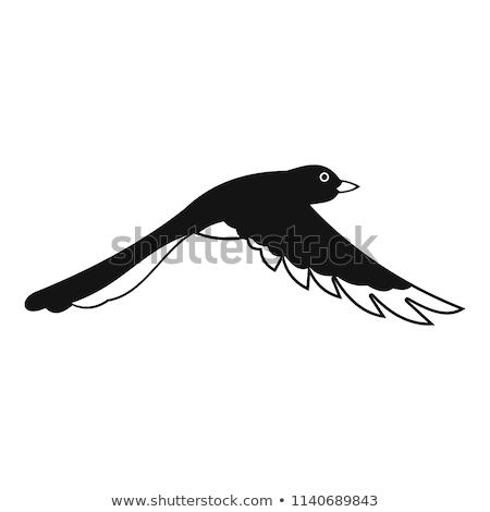 BirdsInFlight Stock photo © smuki
