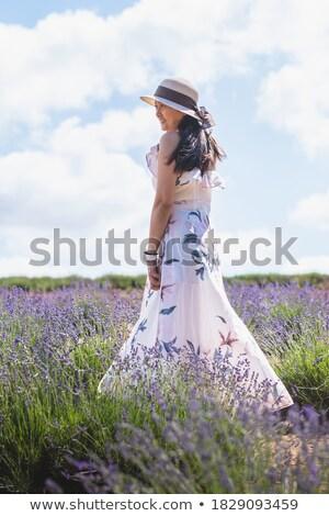 ラベンダー 茂み タスマニア州 詳細 美しい 紫色 ストックフォト © jrstock