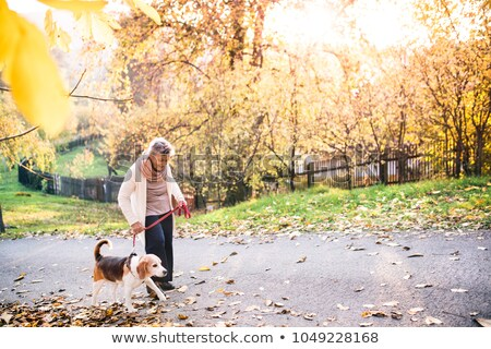 Elderly woman walks in park Stock photo © natalinka