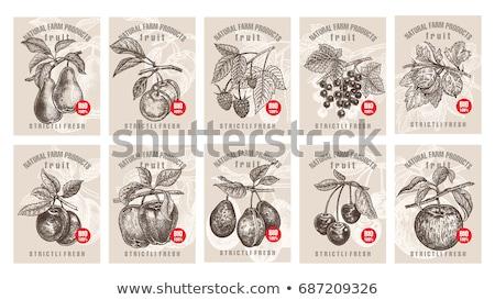 фрукты Этикетки груши бумаги продовольствие плодов Сток-фото © kariiika