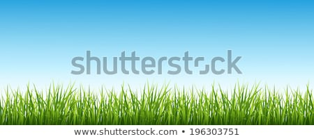 illustration of grass and sky stock photo © photosoup