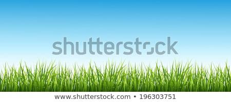 実例 草 空 風景 フィールド 緑 ストックフォト © photosoup