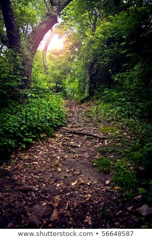 Drzew lasu ścieżka streszczenie Zdjęcia stock © sirylok