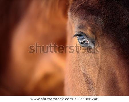 çiftlik · at · güzel · çim · kafa - stok fotoğraf © diabluses