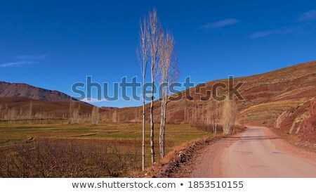 Green and Bare Rocks in the Mountains Stock photo © wildnerdpix