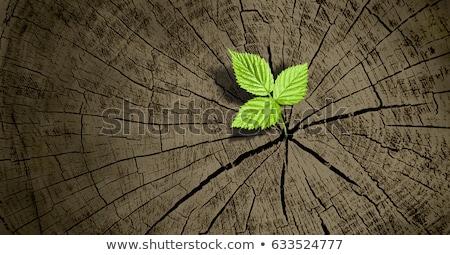 Zdjęcia stock: Liścia · starych · drzewo · jesienią · lasu · drewna