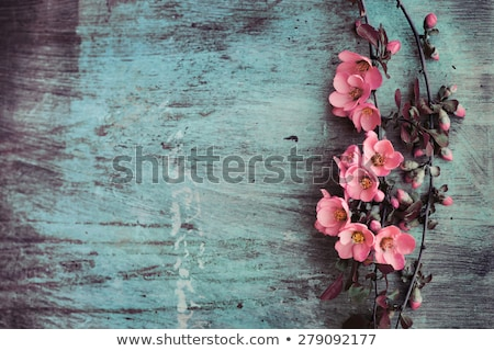 Grunge background with pink flowers  Stock photo © Morphart