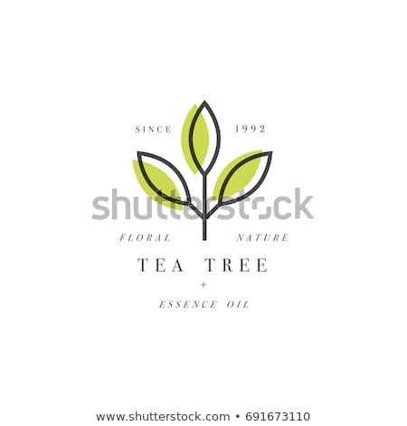 green tea logo vector stock photo © krustovin