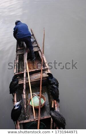 vôo · pescaria · peixe · natureza · pássaro · África - foto stock © bbbar
