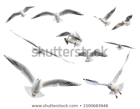 flying seagull stock photo © bbbar