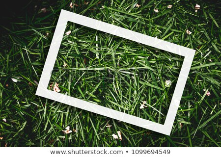 Texture of freshly mown grass lawn Stock photo © stevanovicigor