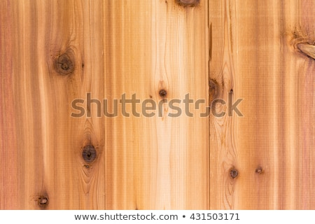 Cedar wood background texture with boards Stock photo © ozgur