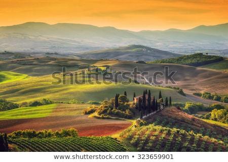 tuscany landscape at sunrise tuscan farm house vineyard hills stock photo © photocreo