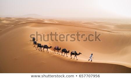 Camelo deserto ilustração engraçado natureza areia Foto stock © adrenalina