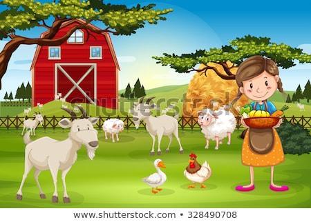 Farm jelenet kecskék természet tájkép háttér Stock fotó © bluering