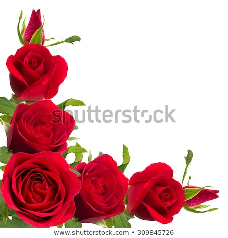 A floral border with red roses Stock photo © bluering