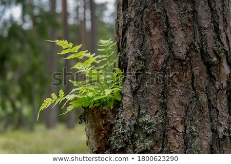 A fern plant Stock photo © bluering