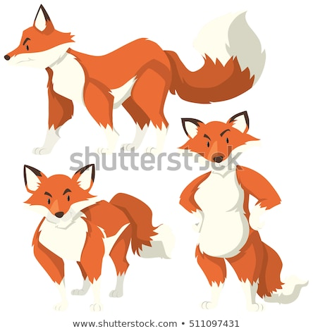 Three different actions of red fox Stock photo © bluering