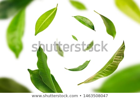 Tea Leafs Concept Stock photo © zhekos
