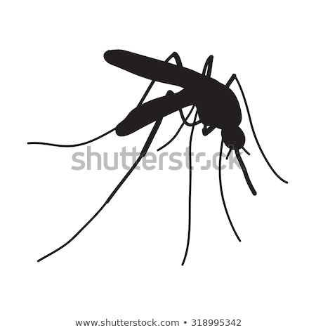 Cartoon color mosquito isolated on white background. Vector illustration Stock photo © lucia_fox